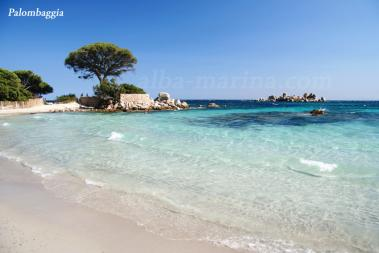 Palombaggia Corse du sud
